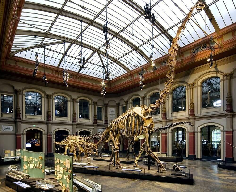 Musée Histoire Naturelle